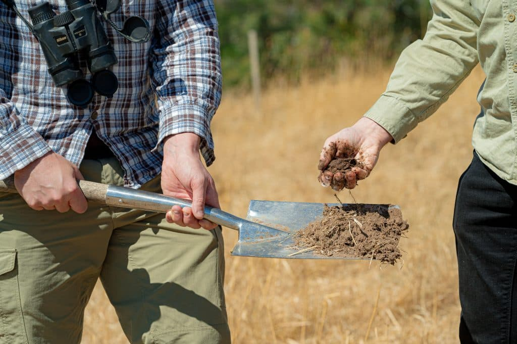 farm farmland outback outdoor outdoors countryside country bush bushland dry wheat weed land soil testing test spade shovel dirt dig digging plant seed seeding